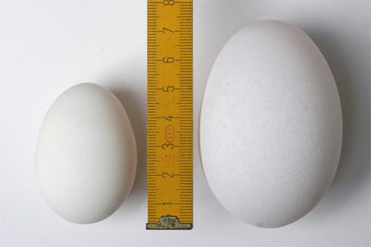 eier-groesse